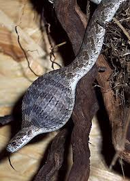 roofvogel slangen savanne